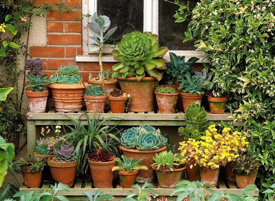 11 Best Succulent Care Tips