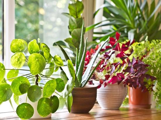 Improper watering kill most of the plants. In this article, learn How to Water Plants properly and 5 mistakes you should avoid when watering plants!