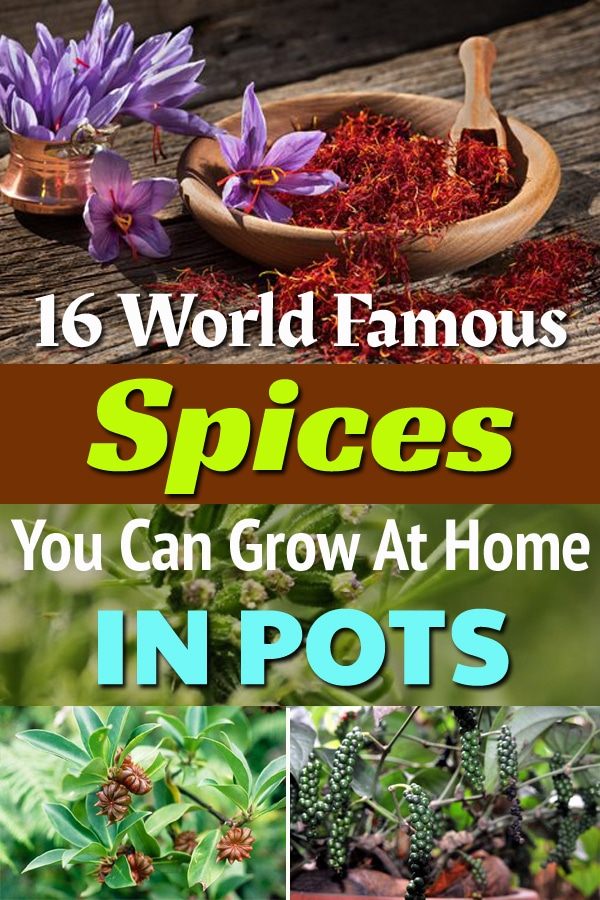 16 World Famous Spices You Can Grow At Home In Pots3