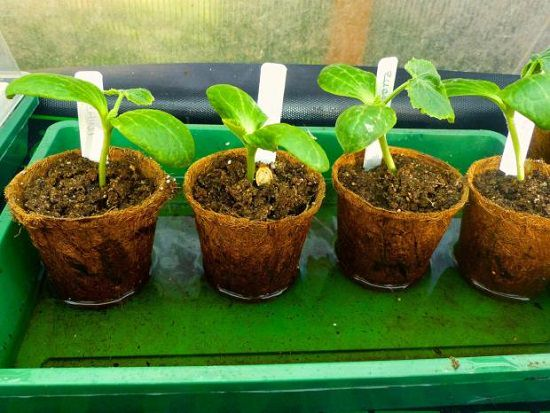 Growing plants from seeds? Increase your success rate by learning How to Water Seedlings properly!