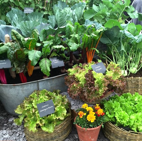 13 Tips To Create A Decorative Container Vegetable Garden
