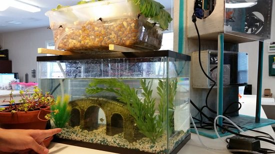 Aquaponics Fish Tank DIY 6