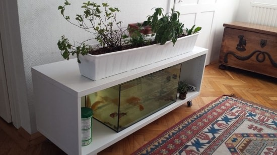 Aquaponics Fish Tank DIY 2