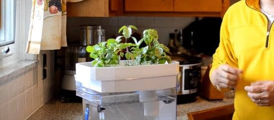 Aquaponics Fish Tank DIY 3