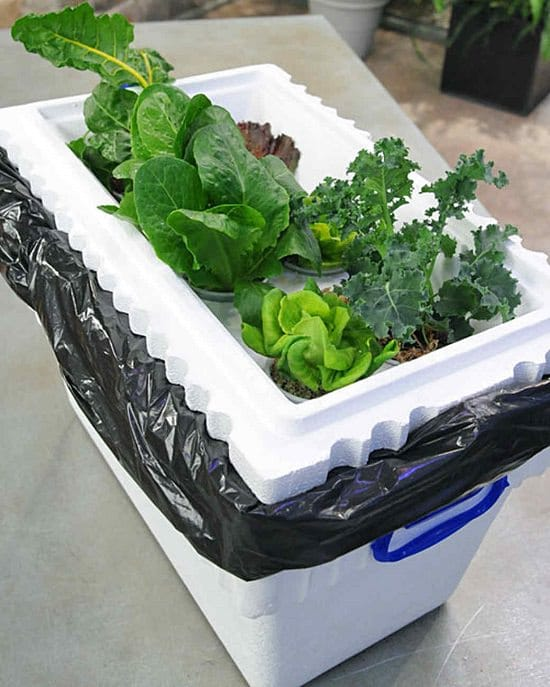 Even if you're a beginner you can build these Homemade Hydroponic Systems with easy supplies and little to no skills.