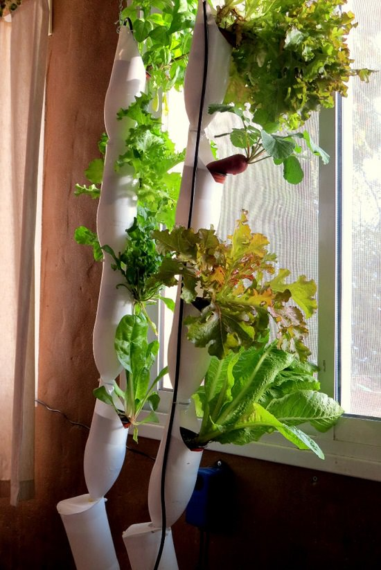 DIY Hydroponic Vertical Garden Ideas