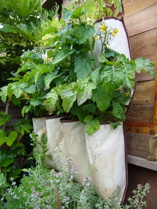 Growing Vegetables Vertically
