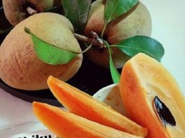 Although human's best companion can eat many fruits and veggies but Can Dogs Eat Chikoo? It is also known as Sapodilla and Naseberry!