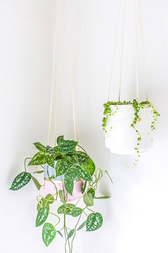 DIY Hanging Plants Indoor Ideas