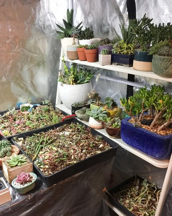 DIY Grow Tent for succulents