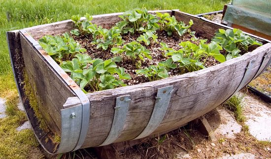 17 DIY Wine Barrel Planter Ideas