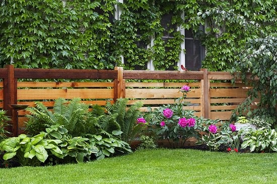 31 Best Privacy Fence Ideas for Backyard on Decorations For Privacy Fence id=74358