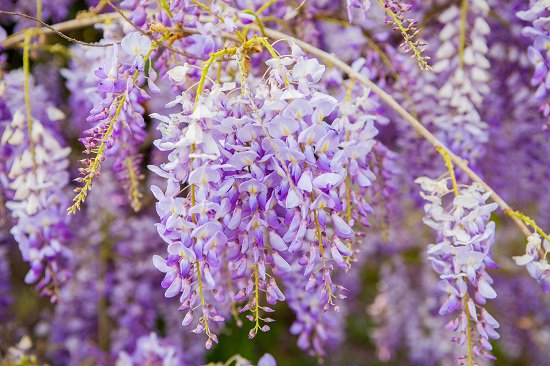 Purple is the color of royalty, and if you're searching for the most stylish Purple Flower Names for a garden, these 67 Types of Purple Flowers will end your quest.