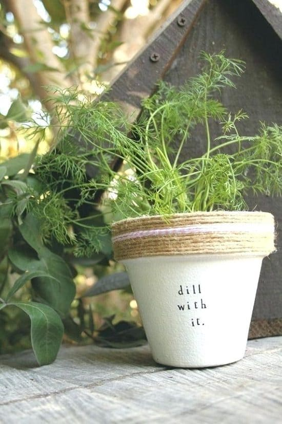 Growing Dill in Pots and Containers