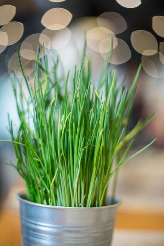 How to care for chives