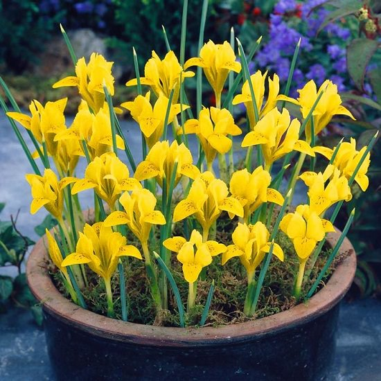 42 Types Of Yellow Flowers For Garden Plants With Yellow Flowers