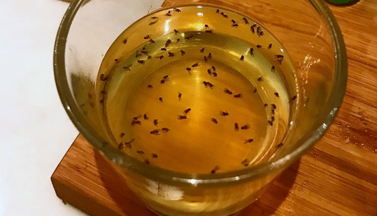 How to Get Rid of Flies in the easiest ways