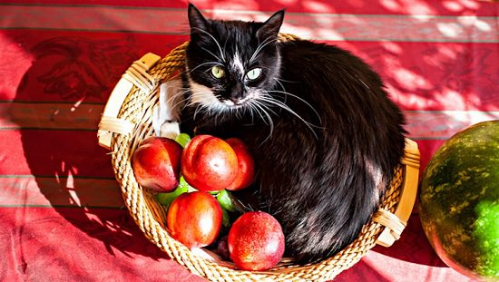 Can Cats Eat Apples? What should be the proper way to give them to cats? Everything is explained in detail in this informative article.