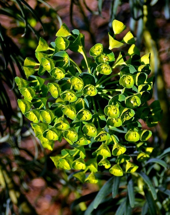 Types of Green Flowers you never knew about
