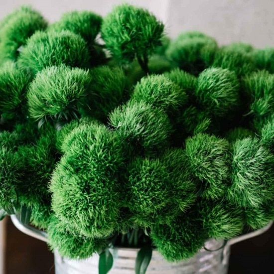 Types of Green Flowers you can plant