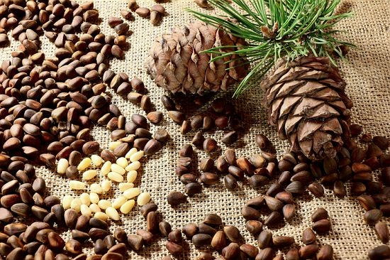 Pine Nuts Nutrition Facts