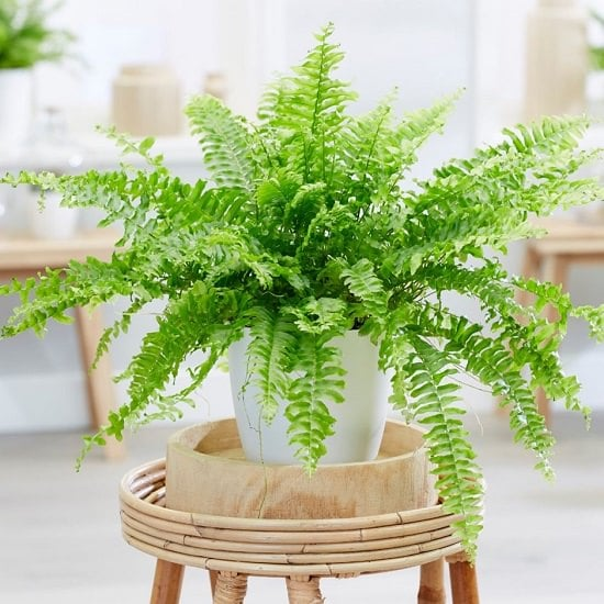 11 Proven Air Purifying Plants Safe For Cats