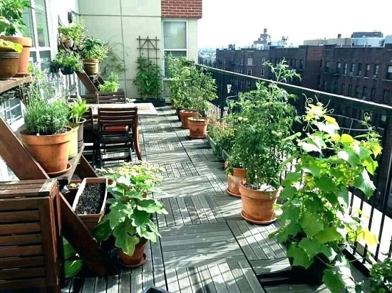 Apartment herb garden ideas