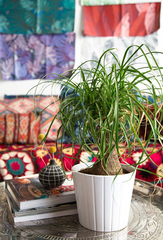 If your reason for being a houseplant murderer is a busy lifestyle or forgetful nature, grow these 14 Indoor Plants that Don't Need Water before a month.