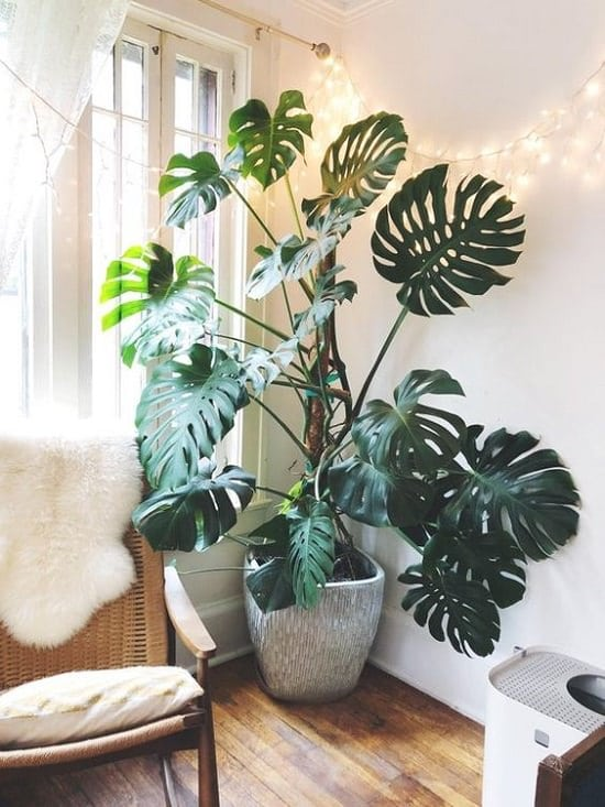 Houseplants for Girls Room 18