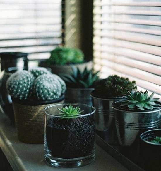 How Much Sunlight Succulents Need?