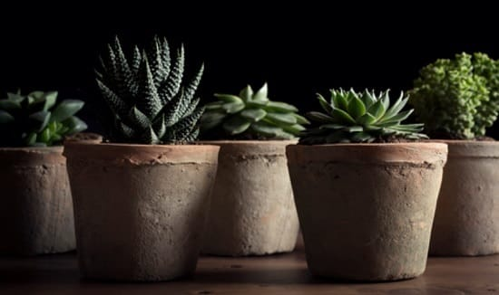 Can Succulents Grow in Shade?