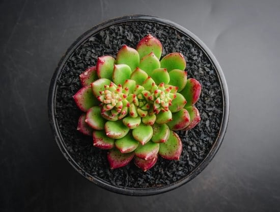Succulent Plants Care in Shade!