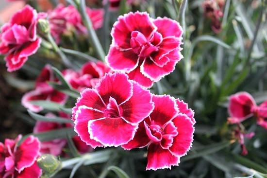absolutely amazing Pink Flower Names