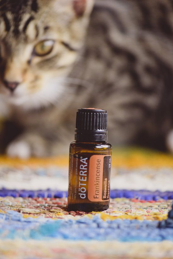 How to Give Frankincense to Cats?