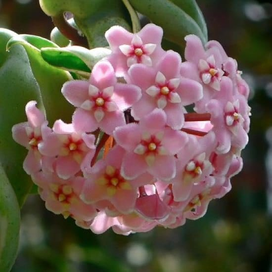 attractive and best Pink Flower Names