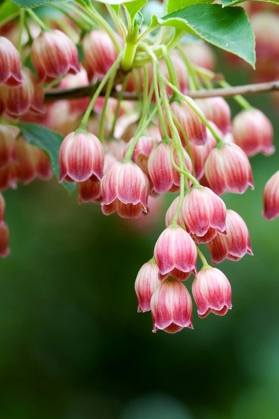 Some of the best Pink Flower Names