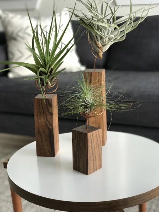 For a great living room, add a dash of green and contemporary style to your tabletop with these 21 best Coffee Table Plants.
