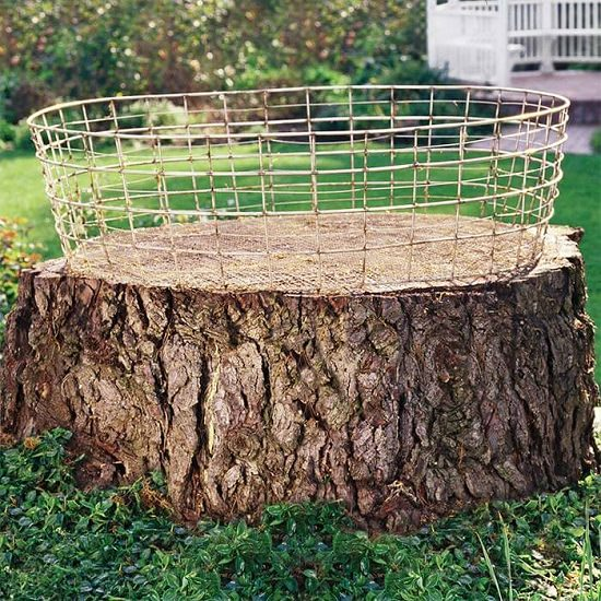Creative Things to Do with Tree Stumps 5