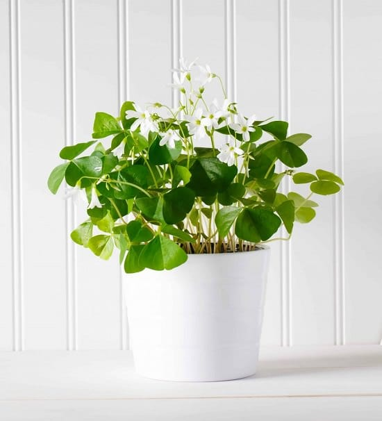 Feng shui plants for wealth