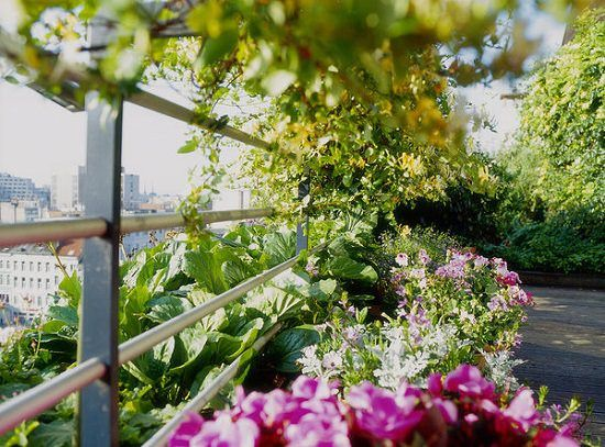 Best Plants for Balcony