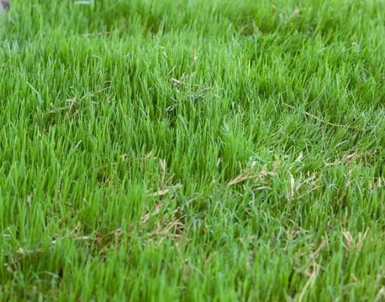 Basic Lawn Care Questions before you start your garden