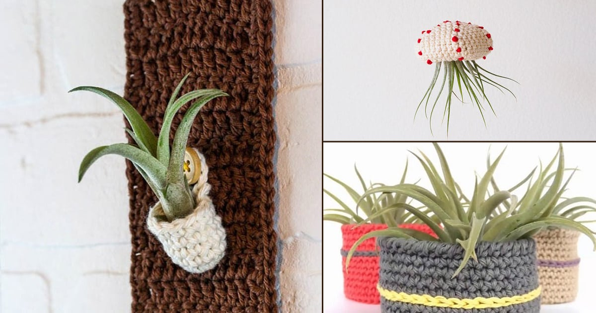 Crocheted Potted Succulents Air PlantAloe in Teracotta Dish