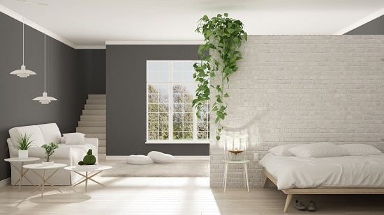 Best Bedroom Plants for a cleaner air