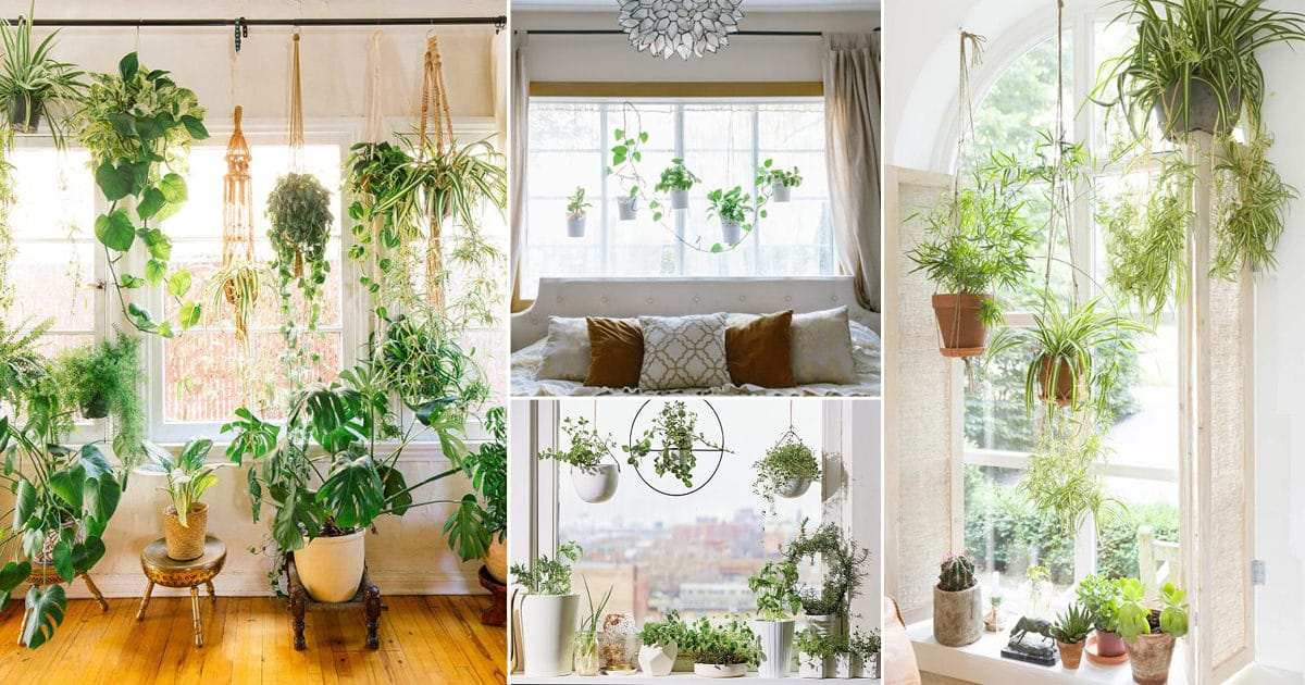 18 Indoor Plants Bedroom Window Garden Ideas Balcony Garden Web