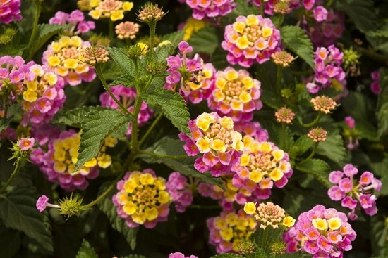 Pink flower names that are sure to make you grow them