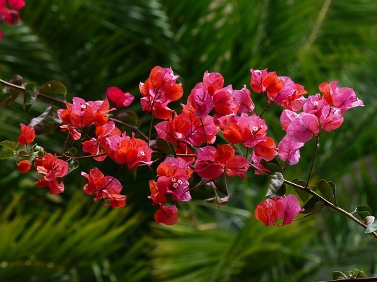 27++ Flower name for pink info
