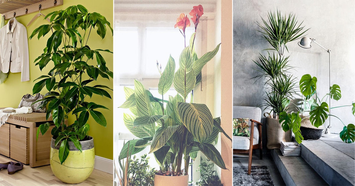 24 Types Of Tropical Foliage House Plants Tropical Indoor Plants Find images of tropical leaf. 24 types of tropical foliage house