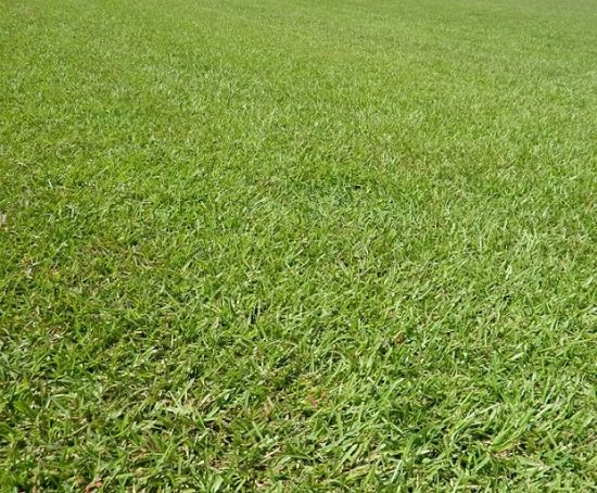 Basic Lawn Care Questions you need to ask yourself