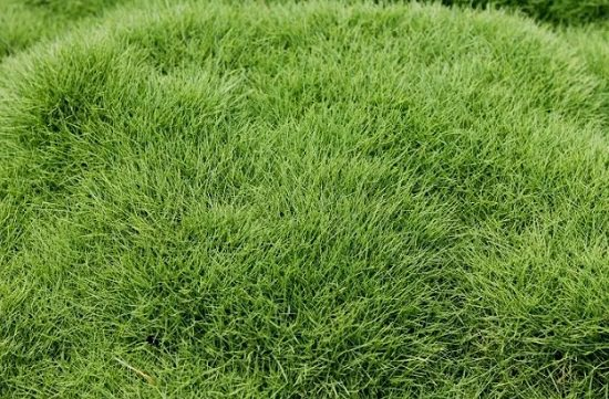 Basic Lawn Care Questions for having an impeccable garden