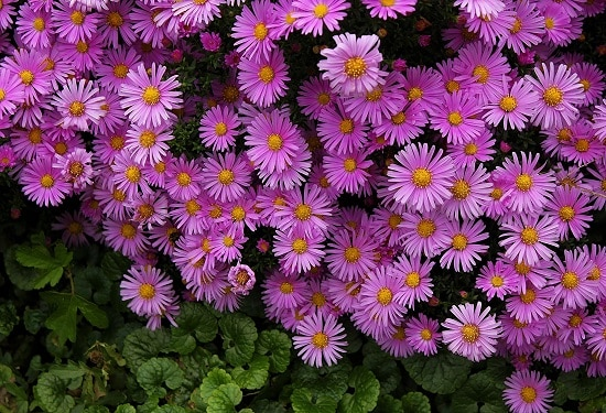 Best Pink Flower Names on the internet